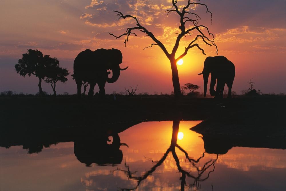 Savuti Elephants at Sunset