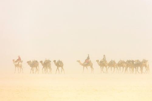 Camel caravan in sandstorm