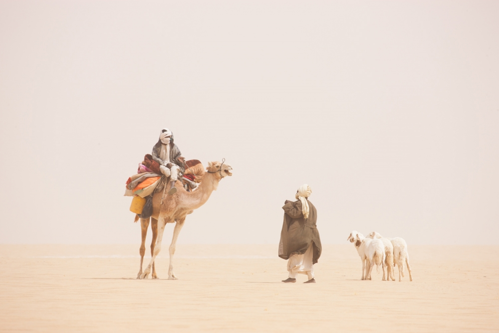 Chadian men with camel and goats meeting in desert during a sand storm