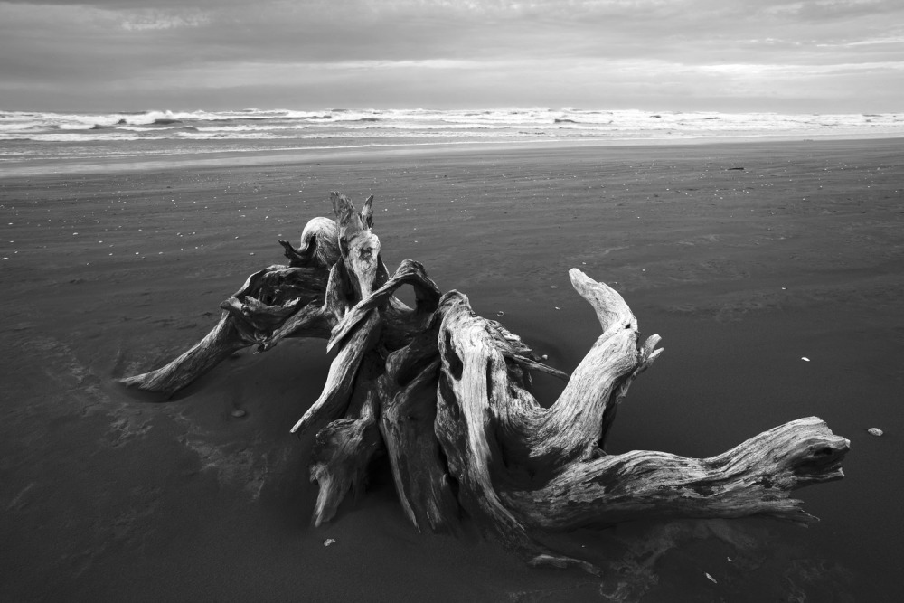 Large driftwood root on sandy beach south of Cape Foulwind