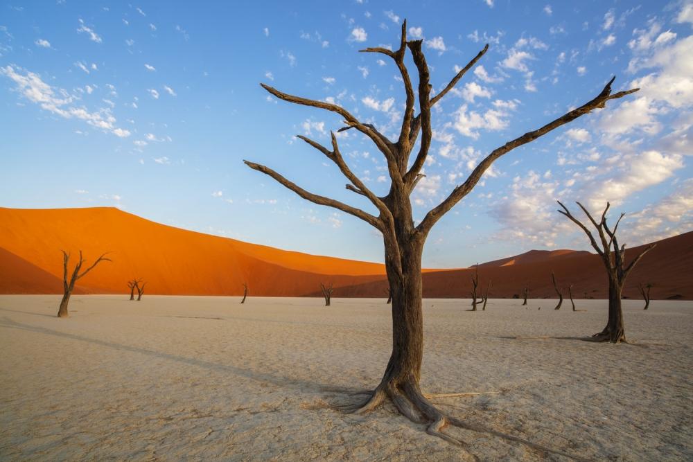 Namibia_Allofs_2019_0044