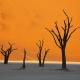 Namibia_Allofs_2019_3606